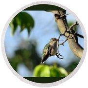Resting Hummingbird Round Beach Towel