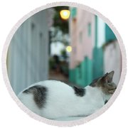 Resting Kitten  Round Beach Towel