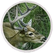 Round Beach Towel featuring the photograph Resting Male Deer by Melissa Messick