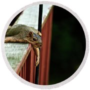 Resting Squirrel Round Beach Towel