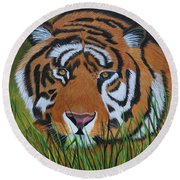 Resting Tiger  Round Beach Towel