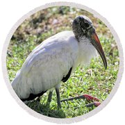Resting Wood Stork Round Beach Towel by Carol Groenen