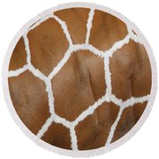 Reticulated Giraffe #2 Round Beach Towel