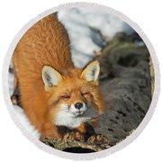 Round Beach Towel featuring the photograph Reynard The Fox by Nina Stavlund