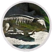 Round Beach Towel featuring the photograph Rhinoceros Iguana by Miroslava Jurcik