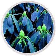 Rhododendron Buds In Spring Round Beach Towel