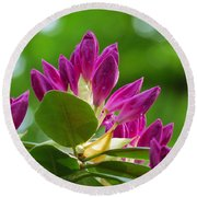 Rhododendron Buds Round Beach Towel by MTBobbins Photography