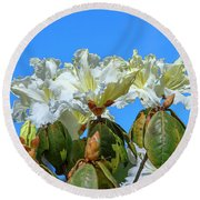 Rhododendron Ciliicalyx Dthn0213 Round Beach Towel