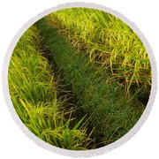 Round Beach Towel featuring the photograph Rice Field Hiking by T Brian Jones