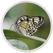 Round Beach Towel featuring the photograph Rice Paper Butterfly - 2 by Paul Gulliver