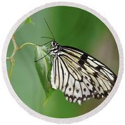 Round Beach Towel featuring the photograph Rice Paper Butterfly by Paul Gulliver