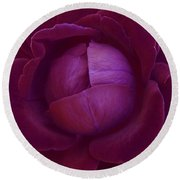 Rich Purple Lettuce Rose Round Beach Towel by Samantha Thome