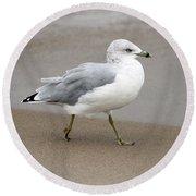 Ring Billed Gull Round Beach Towel