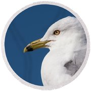 Ring-billed Gull Portrait Round Beach Towel