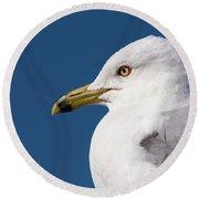Ring-billed Gull Portrait Round Beach Towel