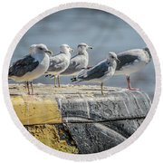 Ring Billed Gulls Round Beach Towel by Ray Congrove