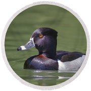 Ring-necked Duck Profile Round Beach Towel