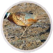 Ring-necked Pheasant Rooster Round Beach Towel by Mike Dawson