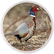 Ring-necked Pheasant Stony Brook New York Round Beach Towel