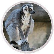 Ring-tailed Lemur #7 Round Beach Towel