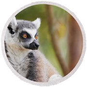 Round Beach Towel featuring the photograph Ring-tailed Lemur Closeup by Nick Biemans