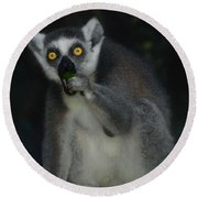 Ring Tailed Lemure Round Beach Towel by Elaine Manley