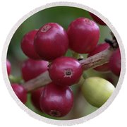 Ripe Kona Coffee Cherries Round Beach Towel