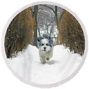 Round Beach Towel featuring the photograph Ripley's Run by Keith Armstrong