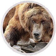 River Bed Grizzly Round Beach Towel by Steve McKinzie