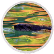 River Otter In Autumn Reflections Round Beach Towel