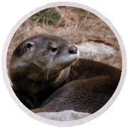 River Otter Round Beach Towel