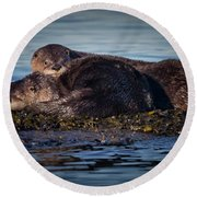 River Otters Round Beach Towel by Randy Hall