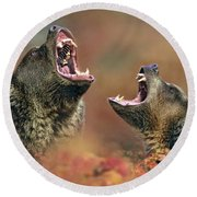 Roaring Bears Round Beach Towel