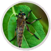 Robber Fly 1 Round Beach Towel
