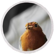 Robin Closeup Round Beach Towel