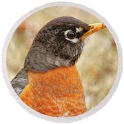 Round Beach Towel featuring the photograph Robin by Debbie Stahre