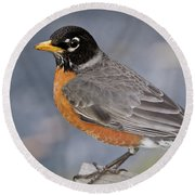 Round Beach Towel featuring the photograph Robin by Douglas Stucky