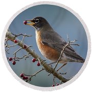Robin Eating Berries Round Beach Towel