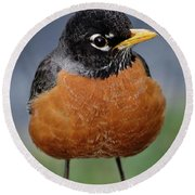Round Beach Towel featuring the photograph Robin II by Douglas Stucky