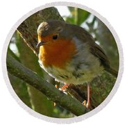 Robin In A Tree Round Beach Towel