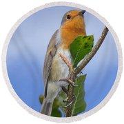 Robin In Eden Round Beach Towel