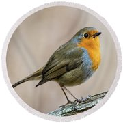 Round Beach Towel featuring the photograph Robin In Spring by Torbjorn Swenelius