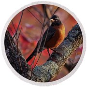 Round Beach Towel featuring the photograph Robin In The Dogwood by Douglas Stucky