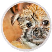 Round Beach Towel featuring the photograph Robin by Mindy Newman