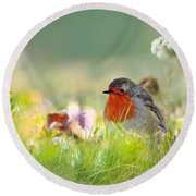 Robin Red Breast Round Beach Towel