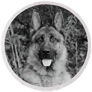 Round Beach Towel featuring the photograph Rocco - Bw by Sandy Keeton
