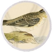 Rock Sparrow Round Beach Towel by English School