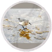 Rock Wren In Mammoth Springs Yellowstone Round Beach Towel