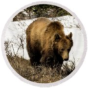 Rockies Grizzly Round Beach Towel