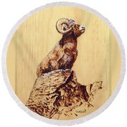 Rocky Mountain Bighorn Sheep Round Beach Towel by Ron Haist